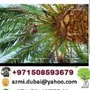 Amanha Agriculture Group